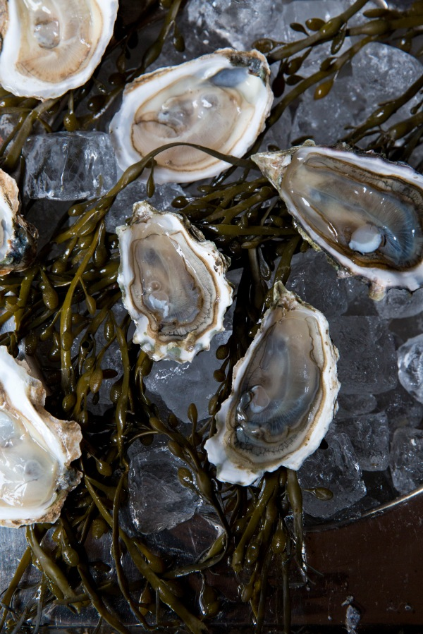 oysters Smith&Mills